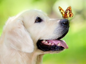 dog-muzzle-butterfly-tongue-sticking-out-spring-summer