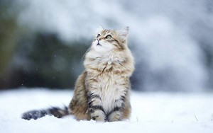 wallpaper-winter-animal-04